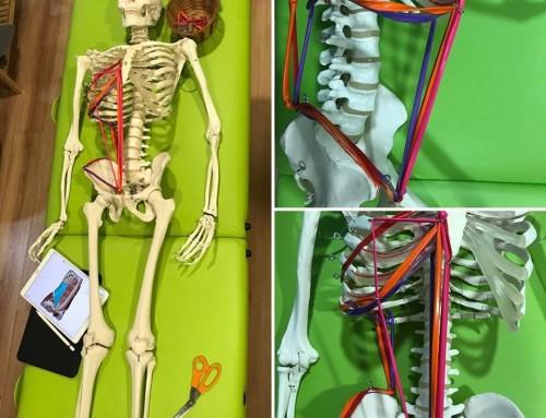 Domingos de anatomía